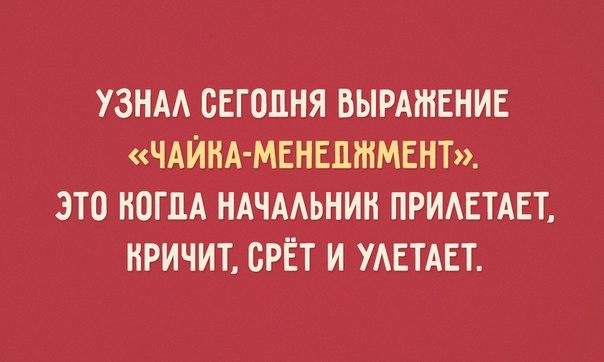 https://pp.vk.me/c7009/v7009038/363e/jjN8aMxwuUc.jpg