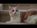 01 Адская кошка