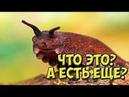ТОП 16 животных о которых говорят Какая гадость