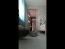 играю с кошкой