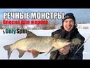Ловля жереха на блесны Трофейная рыбалка в Подмосковье OnlySpin