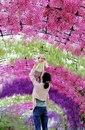 Тоннель цветов в японском саду Кавати Фудзи