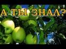 Уход за яблоней: правила, которые должен знать каждый