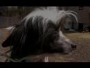 Введение в собаковедение Серия №14