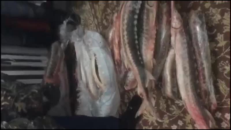 Более 100 кг осетра и икры изъято у браканьеров Астраханскими пограничниками
