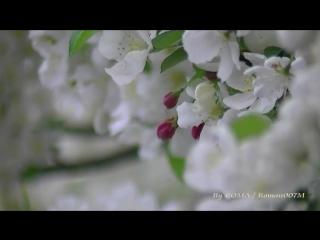 А мне бы быть Ветром, JVC Everio GZ-HD500 Spring footage, some macro filming, Vetrom 2011