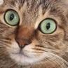 кот икает coub