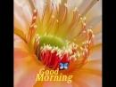 Природа доброго утра