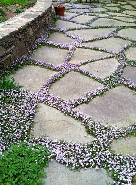 Идея: цветущие почвопокровные между плитами дорожки. Можно использовать фиолетовый тимьян ползучий. … (1 фото) - картинка