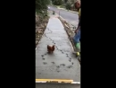Chicken Ruins Freshly Paved Concrete