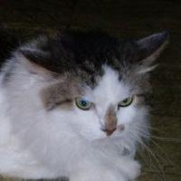 Кот Чарлик