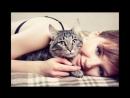 Серые кошки дымчатая удача spian scscscrp