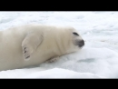 Peaceful seal nursery (not graphic)