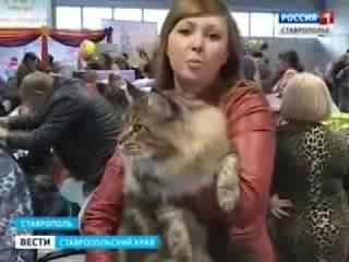 Лучший друг на выставке  кошек