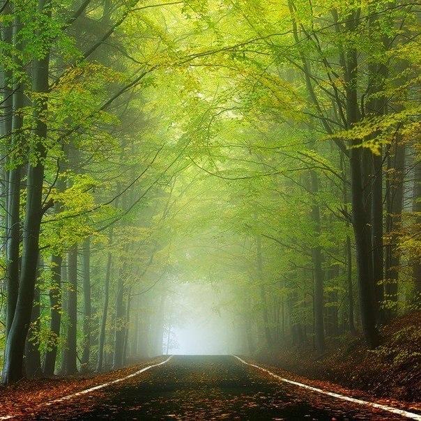 Загадочный чешский лес