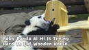 Baby Panda Ai Mi Is Trying Hard To Eat Wooden Horse | iPanda