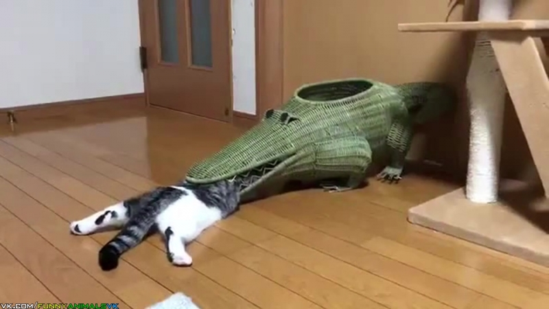 Декоративный крокодил поедает кота Decorative crocodile eats the cat