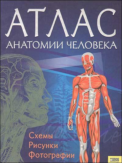 Клиническая анатомия сосудов и
