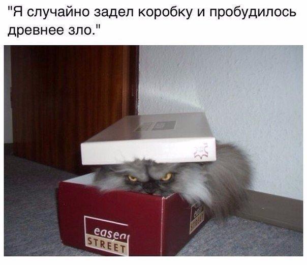 http://cs635101.vk.me/v635101788/5a20/H7rlqZu_Smg.jpg