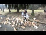 Зверское нападение кроликов на девушку 18+