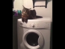 """""""📽 from acoonitum.se 😂😂😂😂😂 ~ double tap ❤❤❤ sweetcatclub"""""""