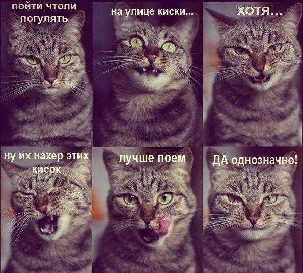 приколы про котят: