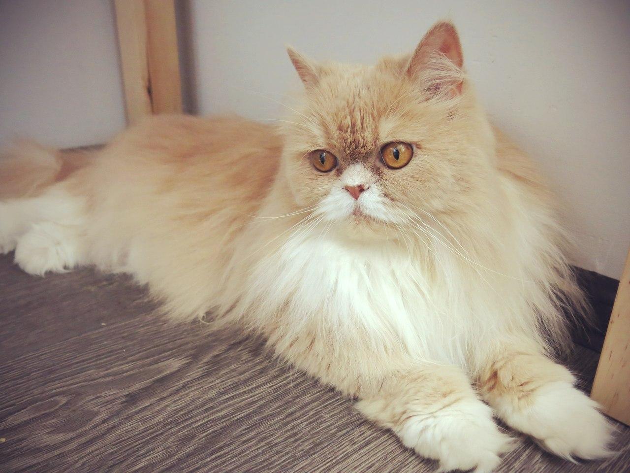 Kitty Yo, Москва - фото №6