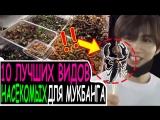 (рус.саб) МУКБАНГ ИЗ АДА! От скорпионов до цикад! Смелые айдолы едят насекомых [UNB]