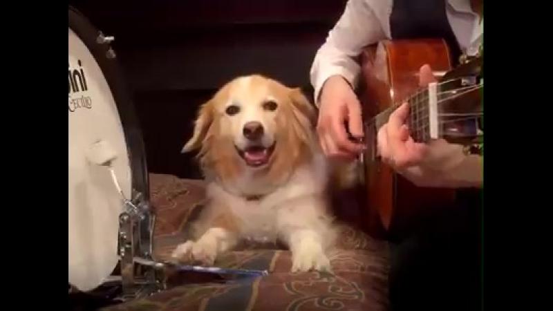 Drum Talk TV - Canine Metronome!