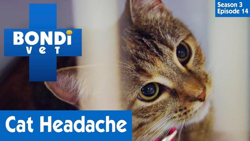 Ветеринар Бондай Бич: У кошки болит голова (3 сезон 14 серия) / Cat Has Headache | S03E14 | Bondi Vet