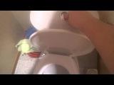 Как правильно смывать в туалете(туториал)