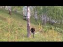 Срубить дерево на дрова