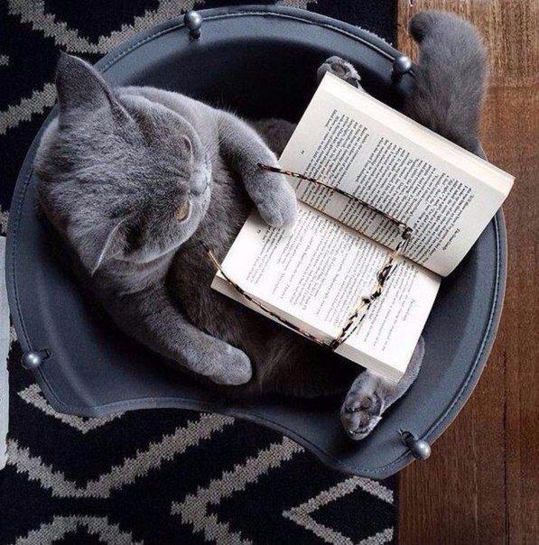 Лучший способ «прокачать» себя – читать книги.