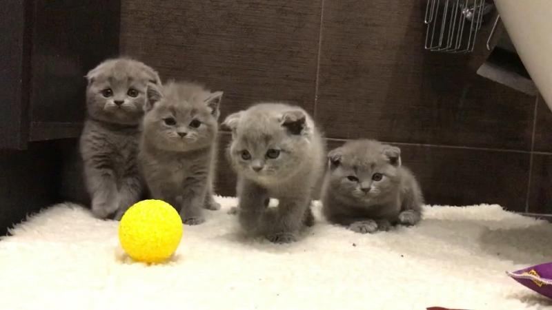 Clubcatnatali_котята