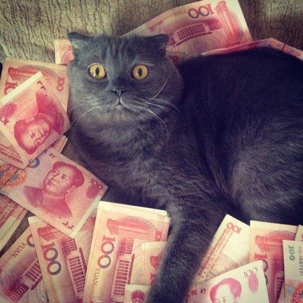 Картинка черный кот с деньгами