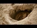 Tarantula Mating- dont lose your head! - Wild Patagonia - BBC Earth