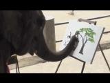 Слон художник.mp4