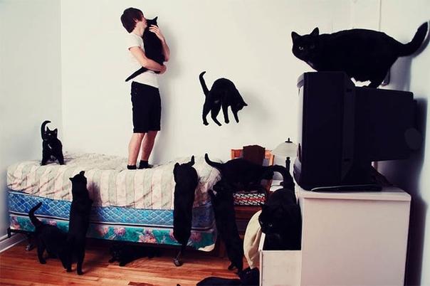 Как мои кошки поднимали меня из мертвых Что такое утро, если у тебя пять кошечек Думаете, это нежный утренний свет за окном и неспешная нега пробуждения Ага, щас. У меня утро сразу напоминает