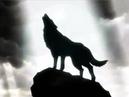 Владение белой Волчицы