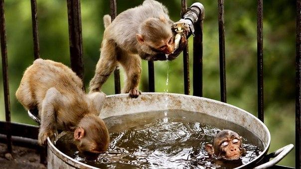 Три обезьяны спасаются от жары на окраине индийского города Джамму.