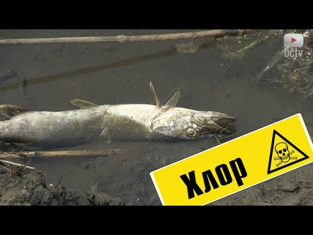 Чи був викид хлору в річку Протока