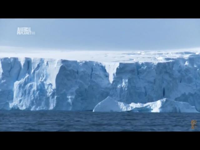 Чудеса голубой планеты . Антарктика 7 Серия