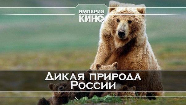 Дикая природа России (2008)