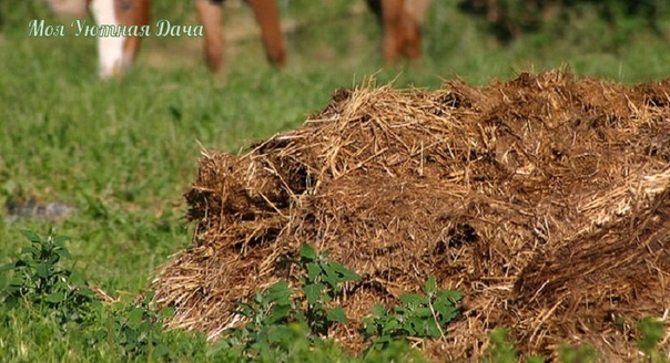Как правильно приготовить компост. Многие полагают, что приготовление компоста дело простое: сложил в ящик или кучу ветки, листья и прочие органические отходы, накрыл и жди, когда созреет.