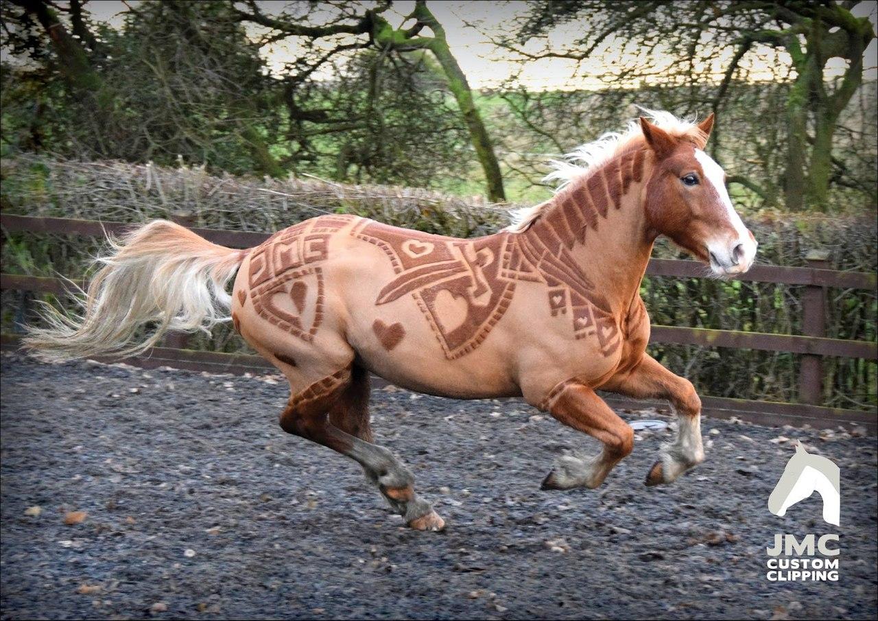 Лошадь с красивой прической