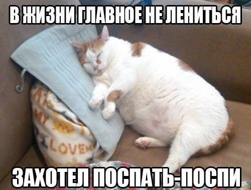 http://cs613425.vk.me/v613425281/1300b/XdcoX-ltxCc.jpg