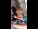 Л. А. кормит щенков в Култуке
