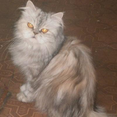 Катюша Залажкова, 25 февраля 1999, Донецк, id226923211
