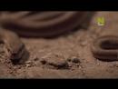 «Подземный мир саванны» Познавательный, природа, животные, 2013