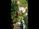 Video-c35d16d812430055adc0cfcc87d36545-
